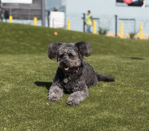 Annual Temporary Closure of the North End of West Hollywood Park, Including Dog Parks