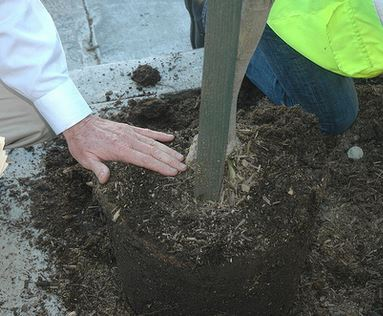 City will Host a Community Tree Planting for its 2018 Arbor Day Celebration