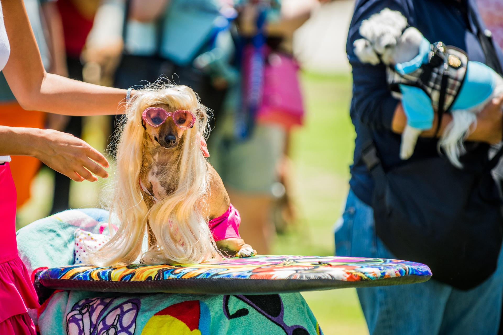 City Goes to the Dogs for PAWS/LA's PAWSAPALOOZA Festival