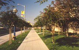 Tree-lined sidewalks near San Vicente